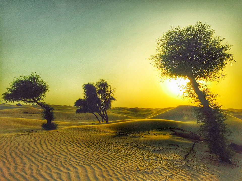 roteiro-abu-dhabi-safari-sunset-3